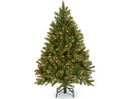 Douglas Fir 4.5FT, Clear