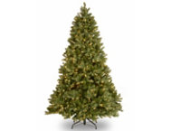 Douglas Fir 6.5FT, Clear