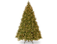 Douglas Fir 9FT, Clear