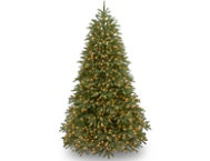 Jersey Fir  7.5FT, Clear