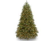 Jersey Fir 9FT, Clear