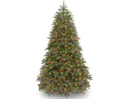 Jersey Fir  7.5FT, Multi