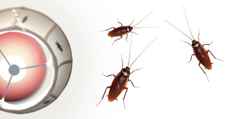 Roaming Cockroach Design