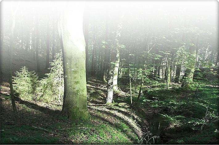 Støt skoven!