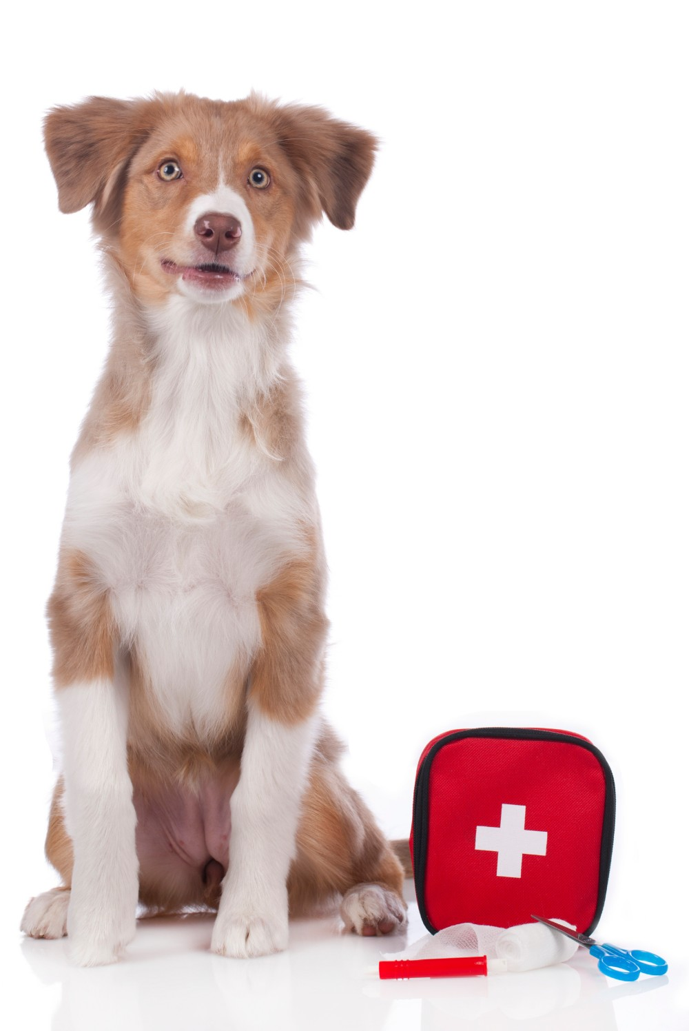 Make sure you have all the essentials covered for everyone—including pets.