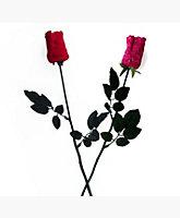 Thong Rose