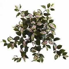 "4-pc. 21"" Hoya Hanging Bush"
