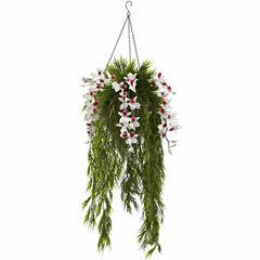 Bamboo And Dendrobium Hanging Basket