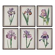 Set of 6 Iris Beauties Framed Wall Art