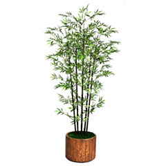 77 Inch Tall Black Bamboo Tree In 16 Inch Planter