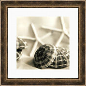 PTM Images™ Starfish & Urchins I Canvas Wall Art