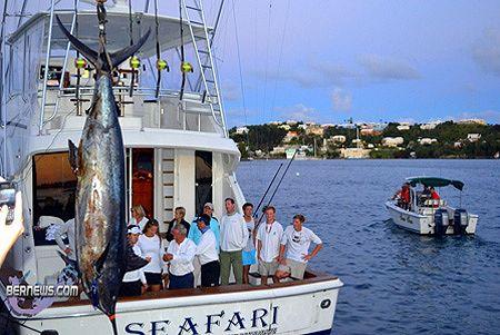 Big game fishing photo gallery marlin 1289lb blue for Fishing in bermuda