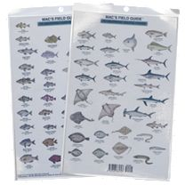 Mac's Field Guide To California Coastal Fishes