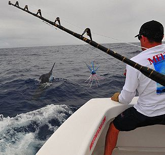 Tracy Epstein takes wraps on another Blue Marlin