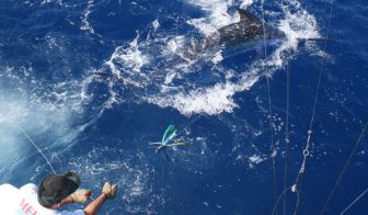 Blue Marlin gets a tad crazy on the wire.