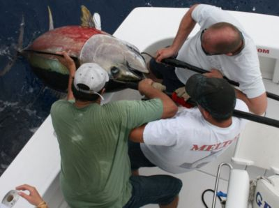 The crew lifts this nice Bigeye over the rail.