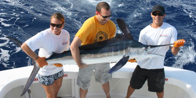 Nice Madeira white marlin, approximately 70 lb., released.