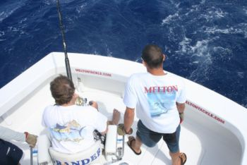 Melton Tackle Customer Chip Wagner puts the wood to an estimated 650 lb. Madeiran Blue Marlin