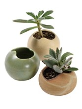 Succulent Cachepots, Set Of 3