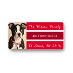 Bordered Bliss -- Photo Return Address Labels