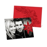 Fresh Poinsettia Horizontal Photo -- Picture Christmas Cards