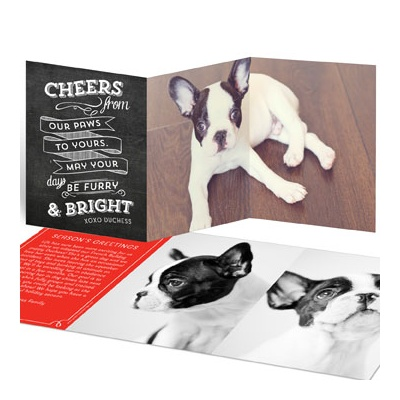 Furry Wishes Photo Christmas Cards