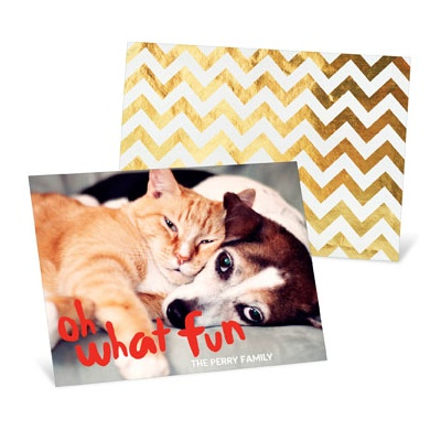Paws Together Now Holiday Photo Cards