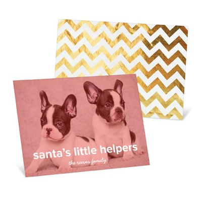 Pet Screen Holiday Photo Cards