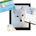 Adopt an Arctic Fox - $50
