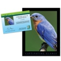 Adopt an Eastern Bluebird