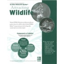 Attracting Wildlife HCB for Volunteers