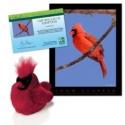 Adopt a Northern Cardinal - $30