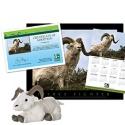 adopt a dall sheep    50