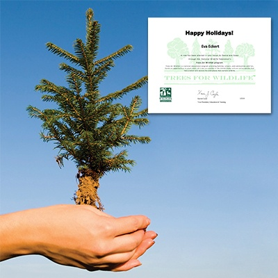Tree Sponsorship - Holidays