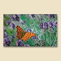 Orange Butterfly Mat