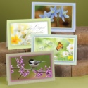 Serene Sympathy Assortment Pack