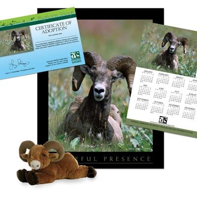 adopt a bighorn sheep    50
