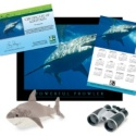 Adopt a Great White Shark - $100