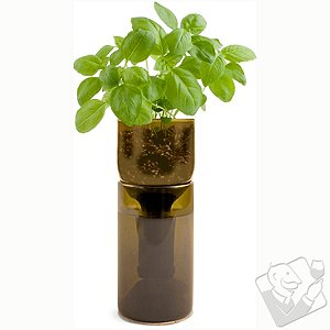 GrowBottle Indoor Herb Garden Kit