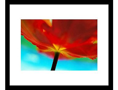 Tulip 18x22 Framed Photo, , large