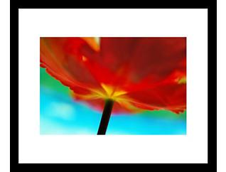 Tulip 28x32 Framed Photo, , large