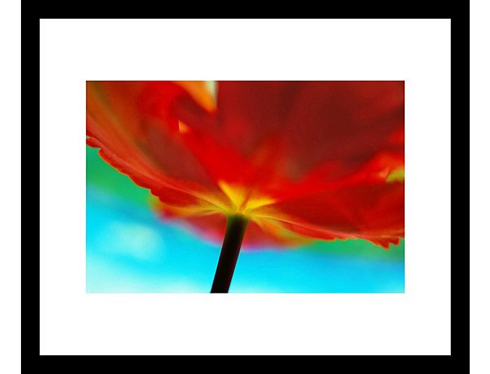 Tulip 33x43 Framed Photo, , large