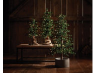shop S/3 Alpine Clear Light Trees