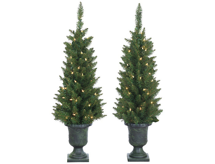 S/2 Potted Norway Pine Trees, , large
