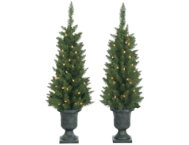 shop S/2 Potted Norway Pine Trees