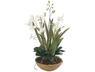 Moth Orchid Planter, , large