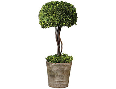 Preserved Boxwood Tree Topiary, , large