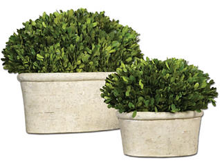 Oval Preserved Boxwood Set of2, , large