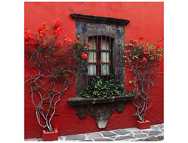 Roses In Red Outdoor Wall Art, , large