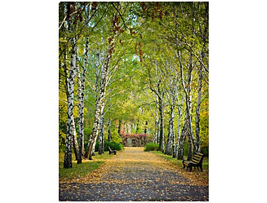 Birch Trail Outdoor Wall Art, , large